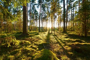 Seperkami miškai